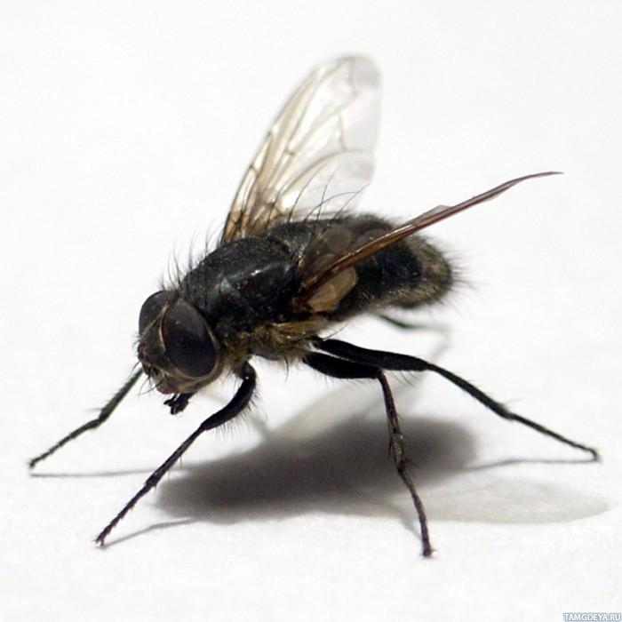 Фоне тэги муха насекомые животные