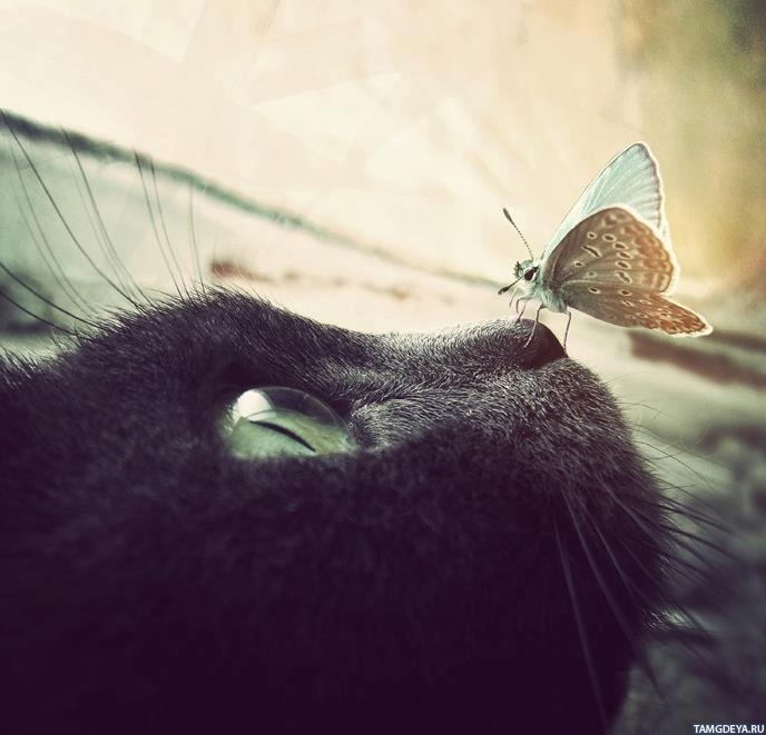 аватарки кошки: