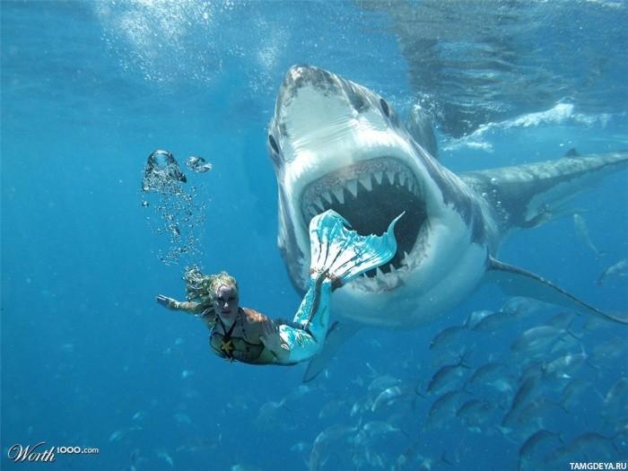 акула преследует русалку - аватарки ...: avatarko.ru/pic.php?id=75592