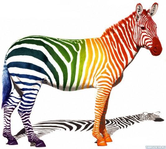 Цветная азбука для детей с картинками  Все для детского