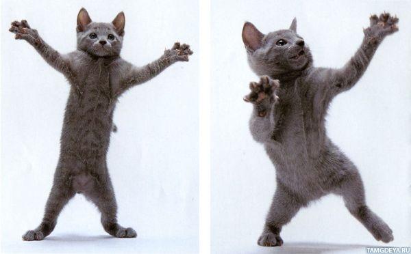 танцующие аватарки: