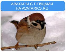 Аватары с птицами