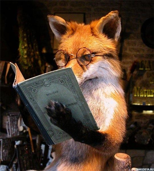 Лиса с книгой