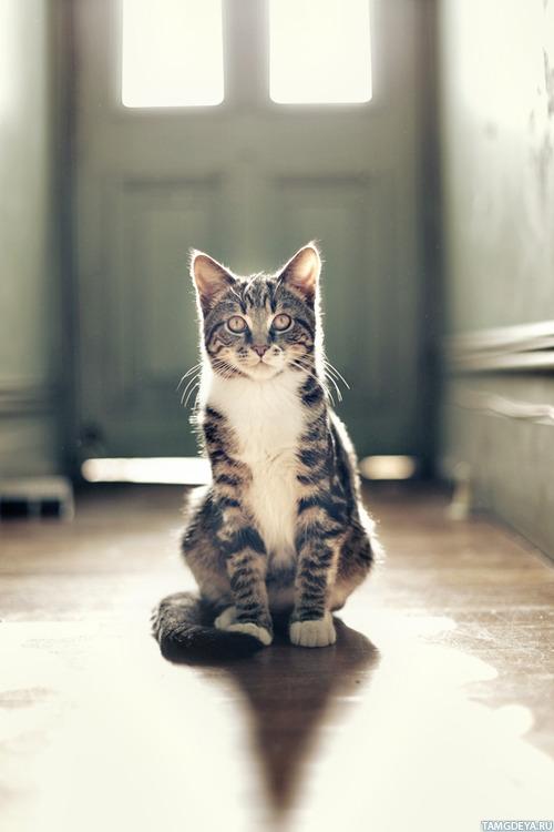 коты аватарки: