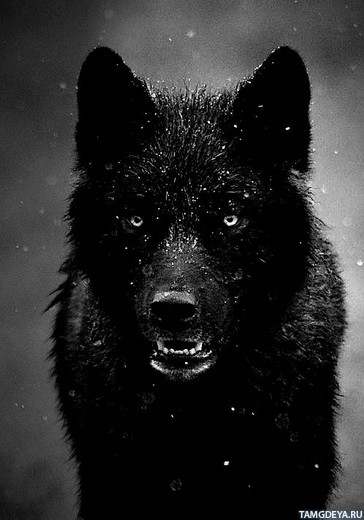 сериал чёрные волки скачать   через торрент