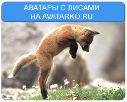 Аватары и картинки с лисами