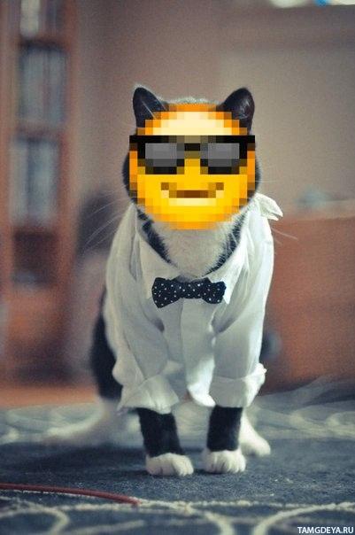 Смайлик кот - 60f