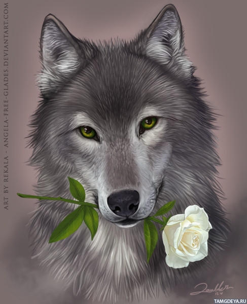 ... розу в зубах | Тэги: Волки | Цветы | Розы: avatarko.ru/pic.php?id=56171