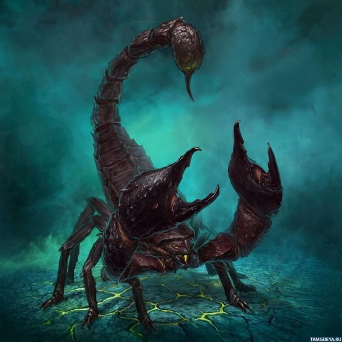 аватарки скорпион: