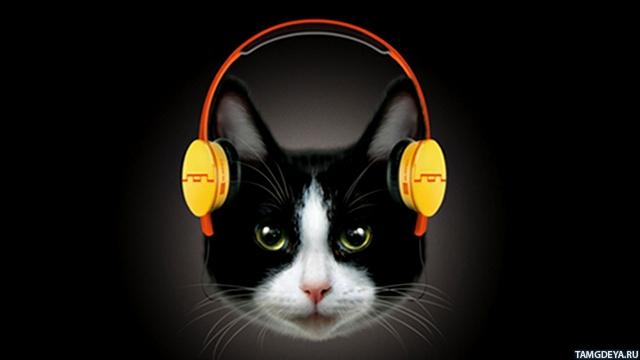 Кот слушает музыку в жёлтых наушниках
