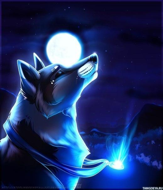 волки луна фото