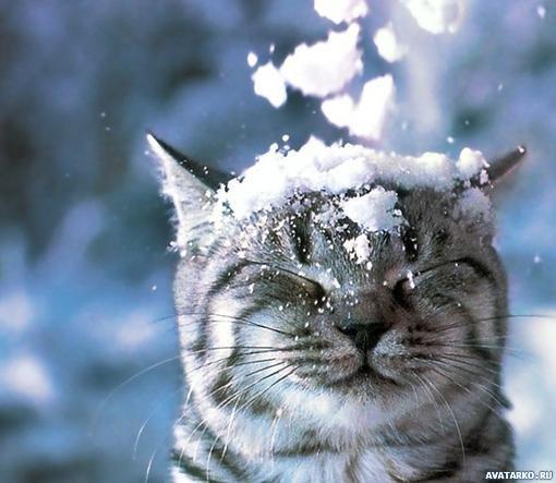 Картинка со полосатым котом и падающим снегом на его ...: http://avatarko.ru/kartinka.php?id=1912