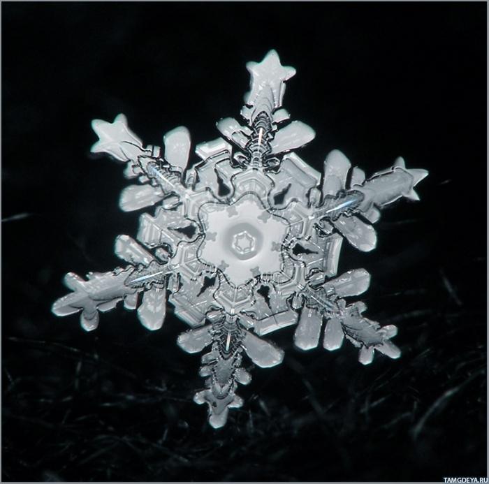 Красивая снежинка на картинке ...: avatarko.ru/kartinka.php?id=18