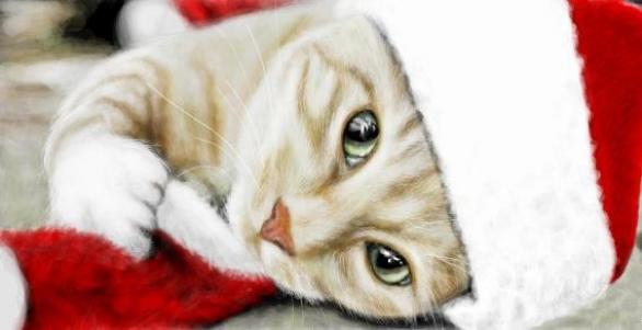 Прикольные картинки с животными на телефон бесплатно