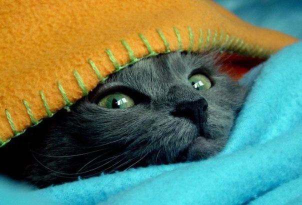 сфоткал киску под одеялом