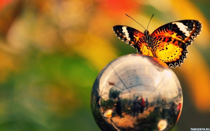 картинки на аватарку бабочки:
