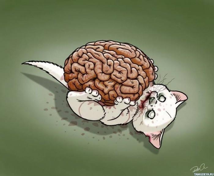 Картинка с белым котом-зомби, который ...: avatarko.ru/pic.php?id=86067