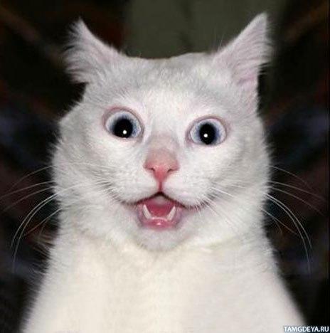 Аватар с котом в шоке, на картинке 150x150 ...: avatarko.ru/kartinka.php?id=675
