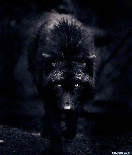 Брюнетка фото в темноте