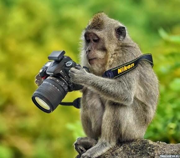 скачать руководство по фотографии зеркальным фотоаппаратом