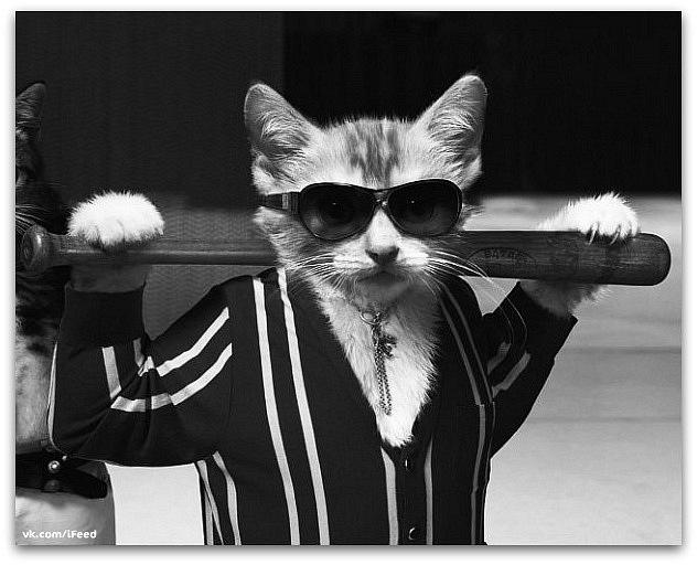 Банда котов нападает на мирных граждан